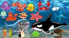 Pelajari Nama Dan Suara Hewan Laut Animasi Gambar