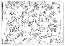 Malvorlagen Gratis Natur Nature Forest Autumn Animals Coloring Page Kindergarten