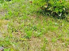Rasen Pflegen Rasentyp W 228 Hlen Rasen Anlegen Und