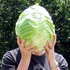 Kitchen Garden A To Z by The Kitchen Garden A To Z Cabbage Counting My