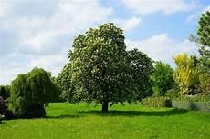 樹木葬とは 知っておきたいメリットやデメリット よくあるトラブルを紹介 終活