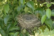 welcher vogel baut welches nest merkw 252 rdiges vogelnest seite 2 willkommen bei uns im