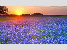 South Texas HD Wallpaper   Background Image   2560x1440
