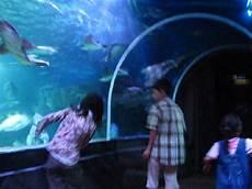 Malvorlagen Unterwasserwelt Berlin Farbige Unterwasserwelt Bild Aquadom Sea