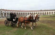 carrozze e cavalli carrozze cavalli senza confini 3 dietro le quinte