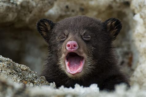 These Real-life Bear Cubs Are All Winners