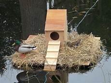 mallard duck house plans 17 best images about ducks on pinterest water jugs