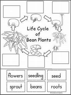 worksheets on plants cycle 13606 cycle of a bean plant activity interactive notebooks guide cycles