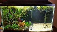 Wow 10 Cool Fish Tank Decoration Ideas How To Copy Them