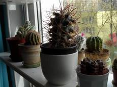 Wie Oft Kakteen Gießen - giessen kakteen wasser kaktus