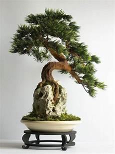 den bonsai baum richtig und praktisch pflegen tipps