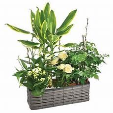plantes d int 233 rieur achat plante verte en ligne interflora