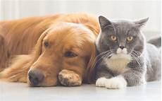 Pet Ownership A Shared Responsibility At Usag Bavaria