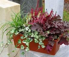 herbstblumen balkon winterhart bepflanzter blumenkasten 40 cm wintergr 252 n balkonien