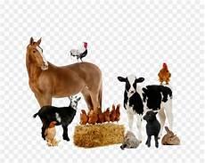Hewan Gambar Kuda Ternak Gambar Png