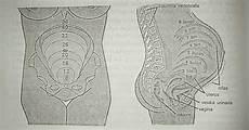 Gambar Anatomi Tubuh Ibu Kesehatan Anda