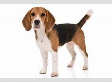 Best Dog Breeds for Children ? American Kennel Club