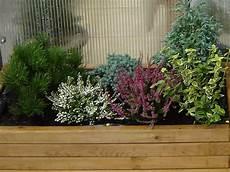 Winterharte Blumen F 252 R Balkonk 228 Sten Gartencenter Mauch Gr