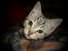 hilfe meine katze frisst kein trockenfutter katzen