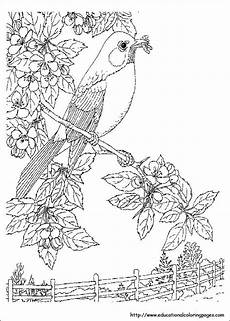 Malvorlagen Tiere Und Natur Realistic Nature Coloring Pages At Getcolorings Free
