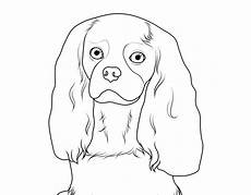 ausmalbild hunde cavalier king charles spaniel kostenlos