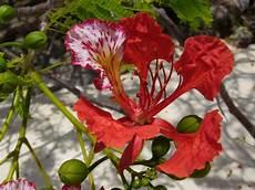 fiori esotici foto fiori esotici da determinare natura nel mondo forum