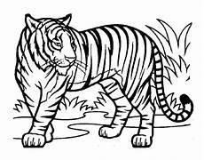 Malvorlagen Zum Ausdrucken Tiger Ausmalbild Tiger Of Tiger Zum Ausmalen Frisch Tiger