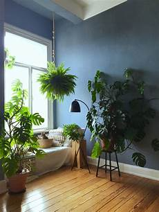 große pflanzen fürs wohnzimmer zimmerpflanze bilder ideen