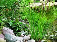 teichpflanzen sind unvermeidbar pflanzen f 252 r teich und