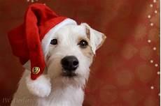 frohen 4 advent foto bild tiere haustiere hunde