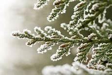 immergr 252 ne pflanzen im winter gie 223 en so wird s gemacht