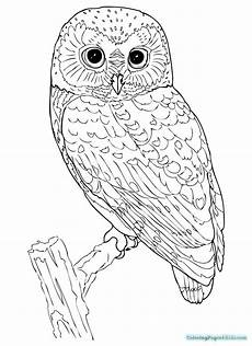 Kostenlose Malvorlagen Eule Owl Coloring Page Coloring Pages For