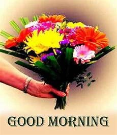 flower images hd morning 38 morning hd flower images for free photo