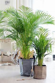 Zimmerpflanzen Gegen Den Winterblues Pflanzenfreunde
