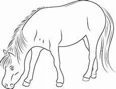 ausmalbilder zum ausdrucken grasendes pferd