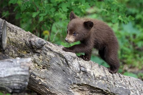 An Abandoned Black Bear Cub Was Found In Southeastern