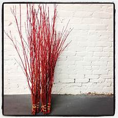 harvesting twig dogwood stems when why how and