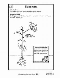free printable worksheets on plants for grade 3 13687 2nd grade plants worksheets parts of a plant kindergarten math worksheets math worksheets