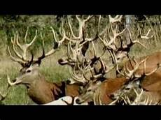 would you take a deer antler supplement youtube