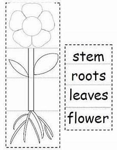 science plants worksheets for kindergarten 13582 plant parts flip book parts of a plant kindergarten science parts of a flower