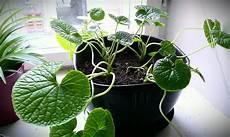 pflanzen fürs schlafzimmer feng shui zimmerpflanzen umtopfen gr 252 ne pflanzen richtig umgetopft