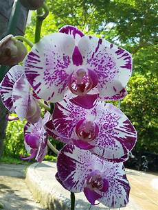 Bunga Anggrek Anggrek Bunga Anggrek Orchid Anggrek