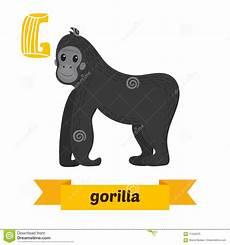 Gorilla G Letter Children Animal Alphabet In Vector