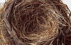 empty nest syndrom empty nest is a myth claim scientists telegraph