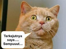 Gambar Kucing Lucu Gambar Photo