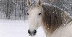 winter foto mit einem pferd im schnee hd hintergrundbilder