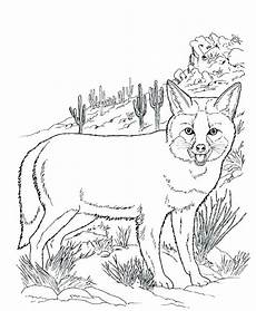 desert animals coloring pages printable 16950 desert animals coloring pages at getcolorings free printable colorings pages to print and