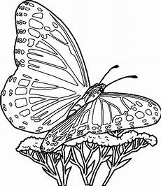 print butterfly coloring pages at getdrawings free