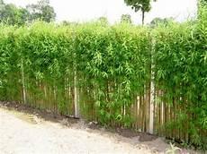 die hecke natuerlicher zaun und alternative zu zaun und hecke bepflanzung garten