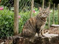 Was Tun Gegen Katzen Im Garten - fremde katze im haus was tun gegen ungebetene g 228 ste